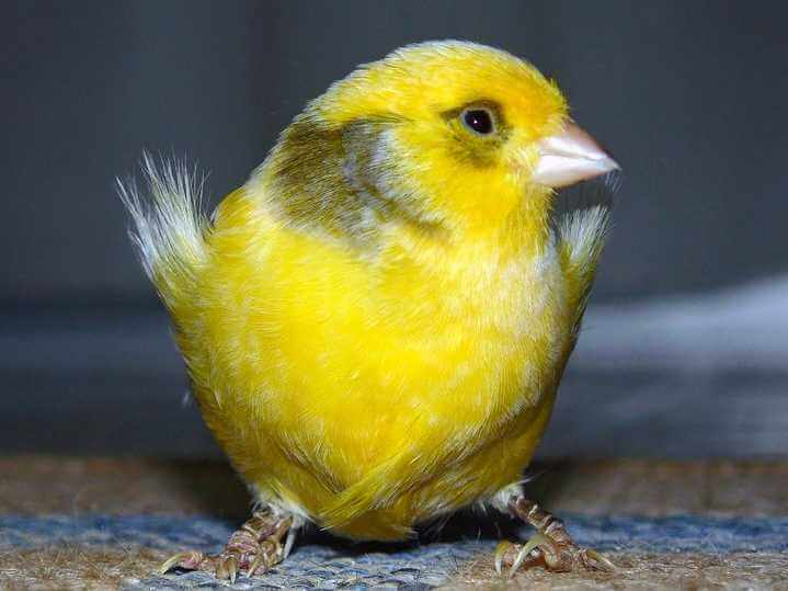 Canary in a coal mine